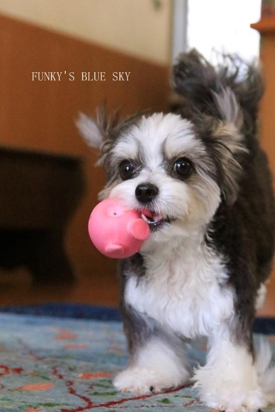 「持ってきたよ~♪」な飛行犬? (+動画)_c0145250_11115041.jpg