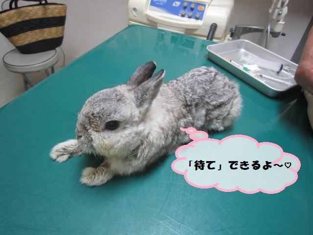 【10才のウサギ】_b0059154_1444664.jpg