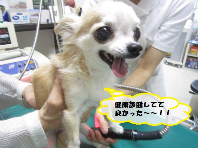 【慢性膵炎 チワワ】_b0059154_15105992.jpg