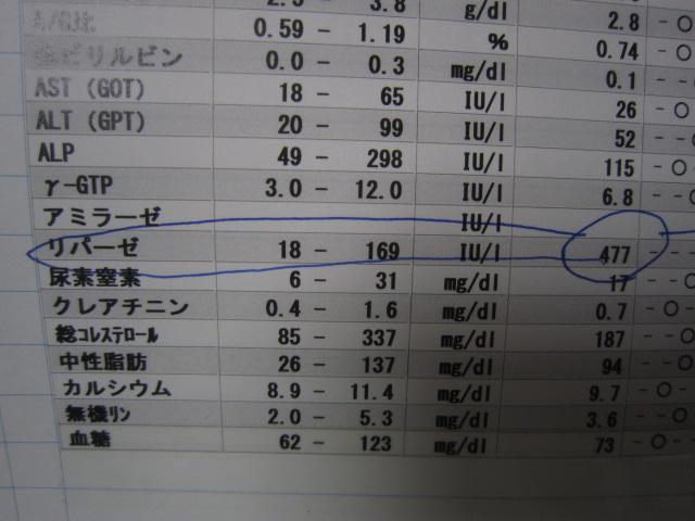 【慢性膵炎 チワワ】_b0059154_1531239.jpg