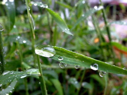 Rainy Days And Mondays _e0071652_8593756.jpg
