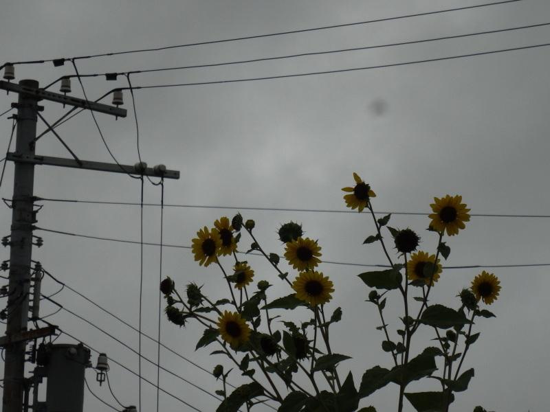 岬砂漠に雨が降る・・・_c0108460_13335030.jpg