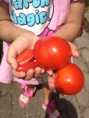 トマトの凛々子さん その④_e0012580_09105179.jpg