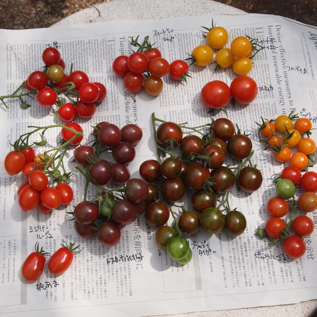 トマトの食べ比べ_a0292194_11142260.jpg