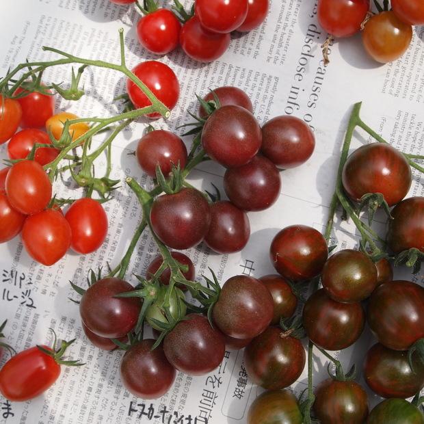 トマトの食べ比べ_a0292194_11363695.jpg