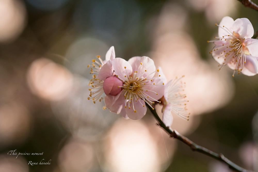 100マクロで覗いた春の訪れ_c0137403_15143419.jpg