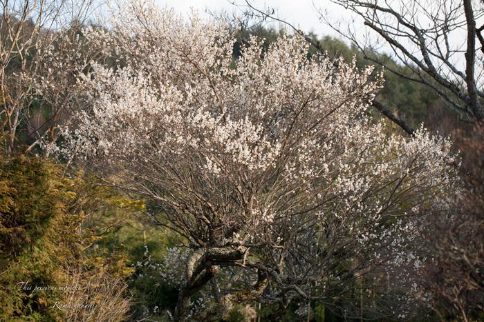 100マクロで覗いた春の訪れ_c0137403_15145995.jpg