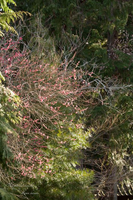 100マクロで覗いた春の訪れ_c0137403_15152582.jpg