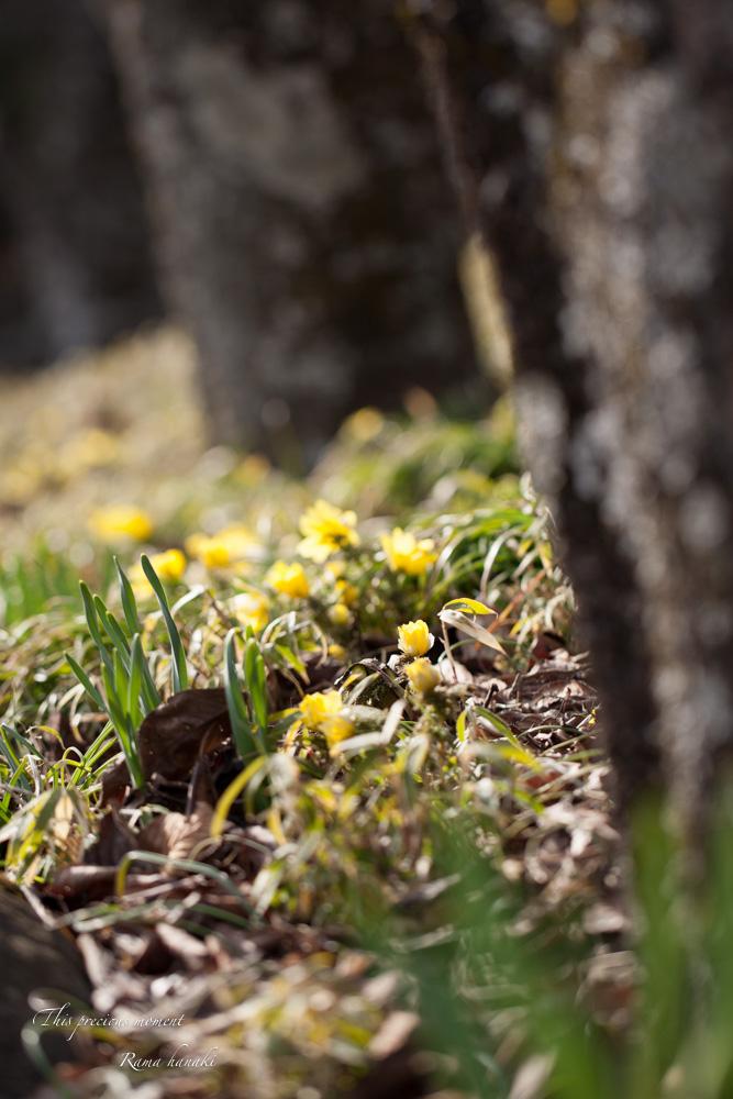 100マクロで覗いた春の訪れ_c0137403_15155148.jpg