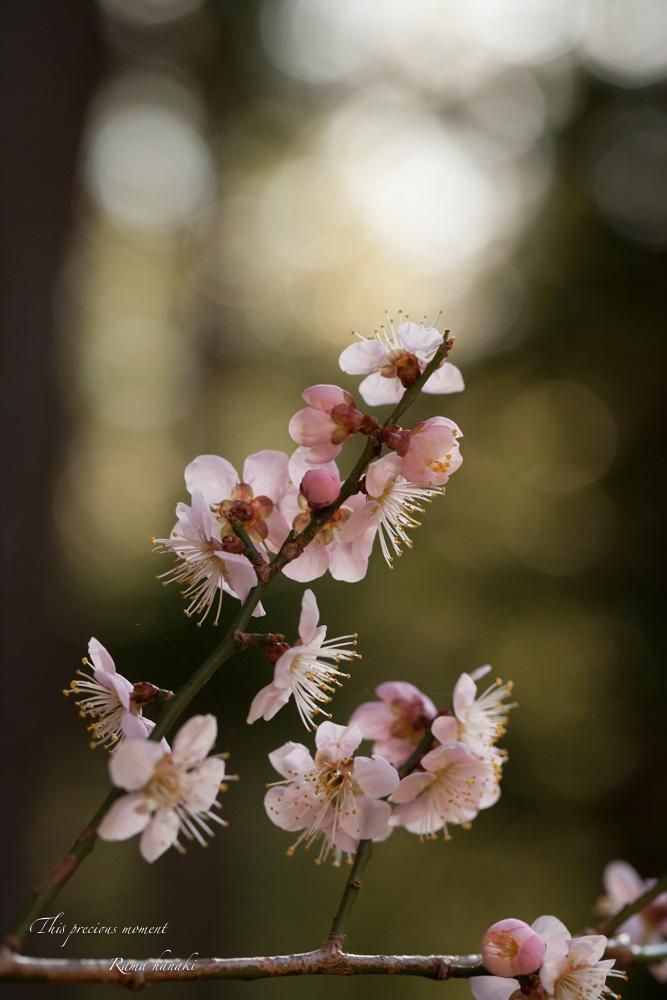 100マクロで覗いた春の訪れ_c0137403_15161470.jpg