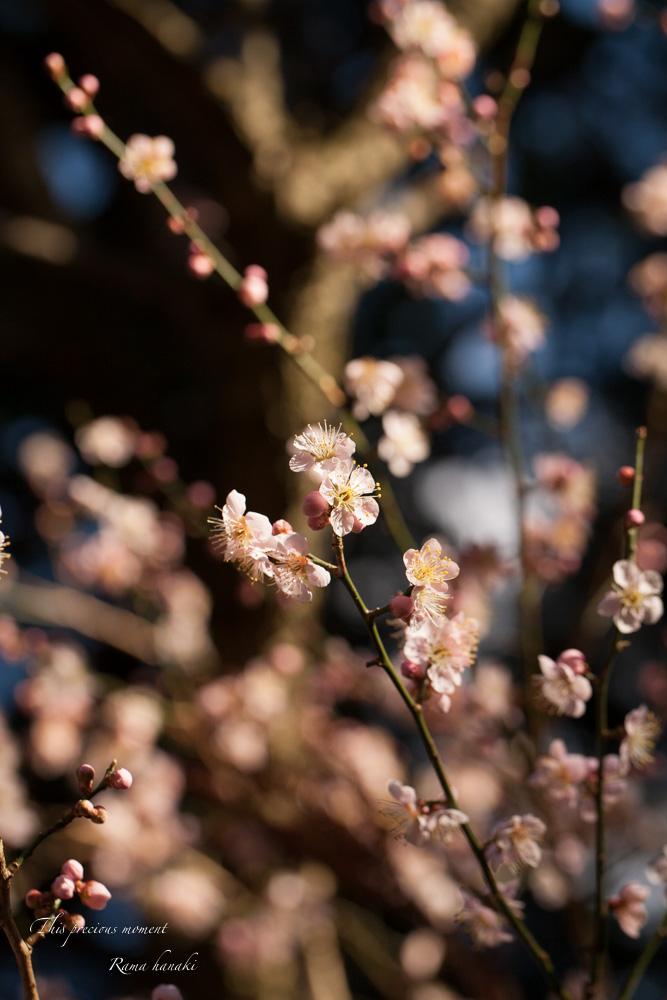100マクロで覗いた春の訪れ_c0137403_1516977.jpg