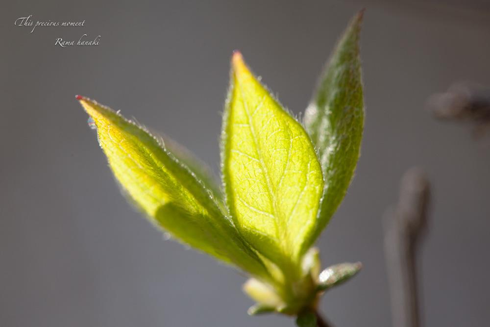 4月長い冬が終わって春うらら_c0137403_15284194.jpg