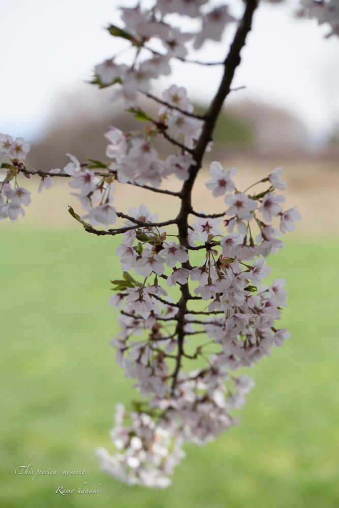 4月長い冬が終わって春うらら_c0137403_15284711.jpg