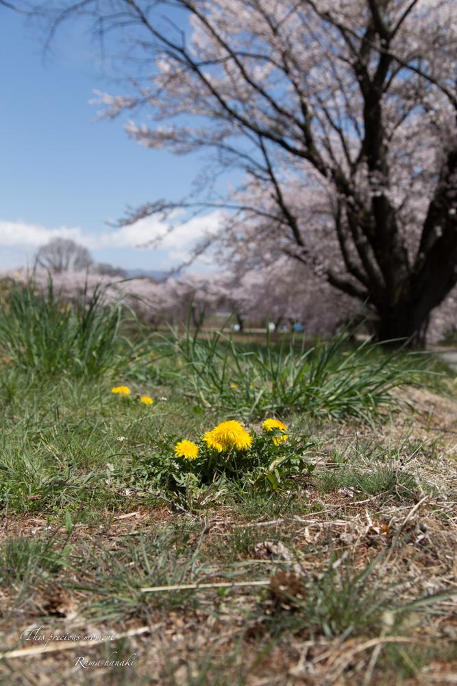 4月長い冬が終わって春うらら_c0137403_1528586.jpg