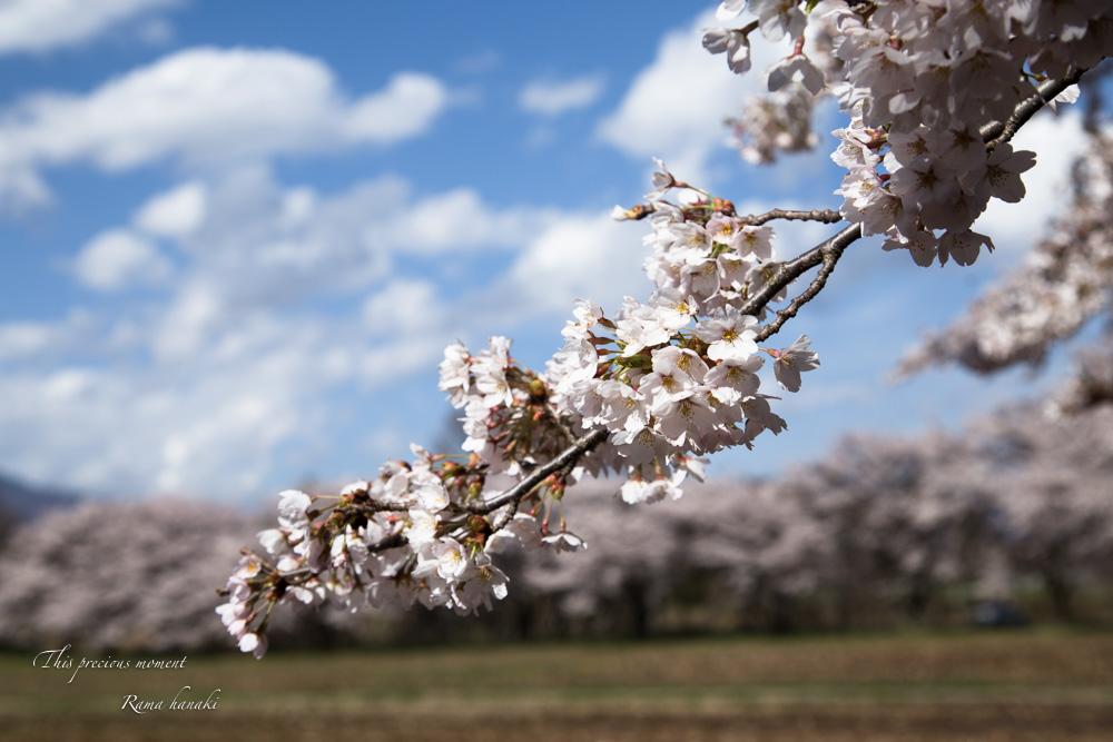 4月長い冬が終わって春うらら_c0137403_15291167.jpg