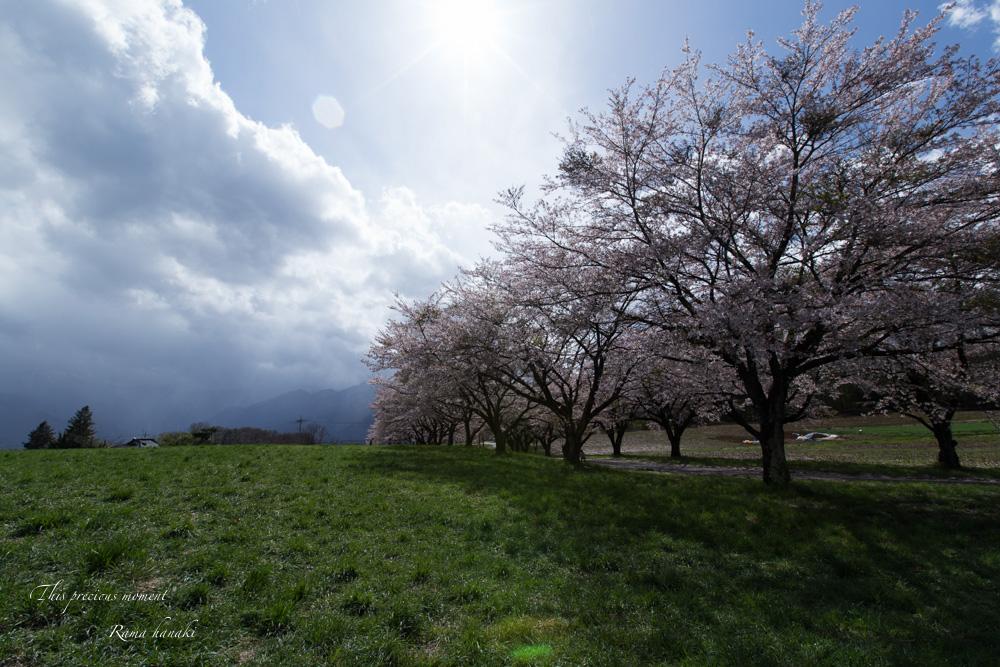 4月長い冬が終わって春うらら_c0137403_15291687.jpg
