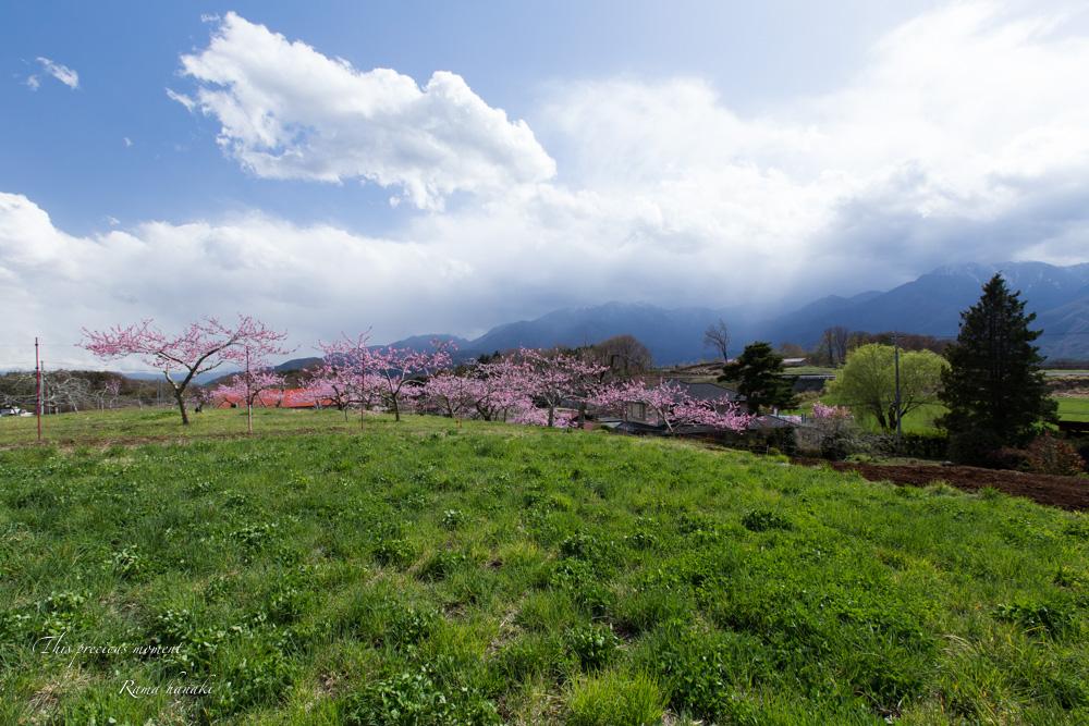 4月長い冬が終わって春うらら_c0137403_1529202.jpg