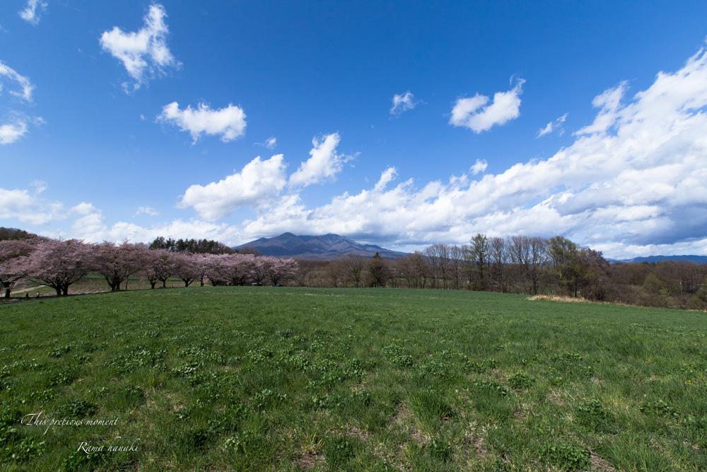 4月長い冬が終わって春うらら_c0137403_15292581.jpg