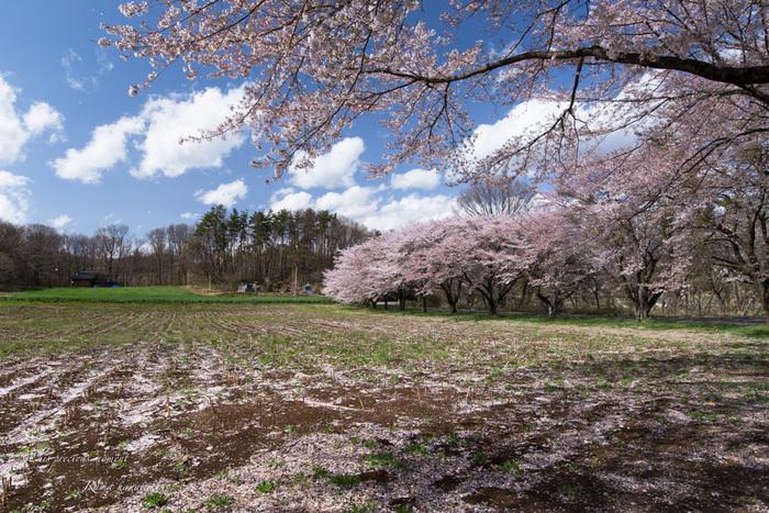 4月長い冬が終わって春うらら_c0137403_15293166.jpg