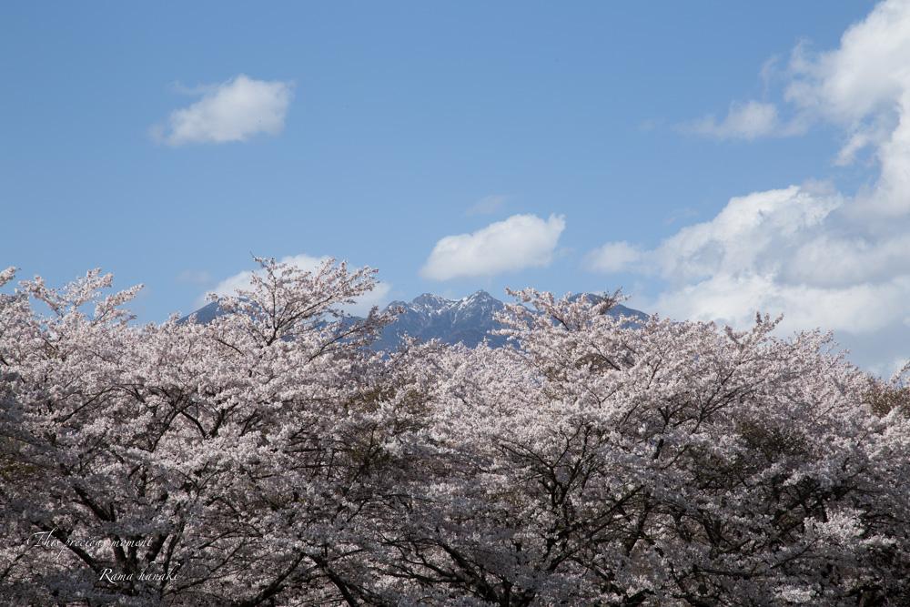 4月長い冬が終わって春うらら_c0137403_1529410.jpg