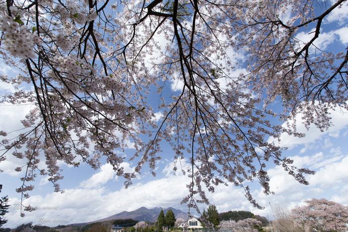 4月長い冬が終わって春うらら_c0137403_1530222.jpg