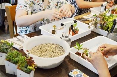 多肉植物ワークショップと9月の豆盆栽ワークショップ_d0263815_16583478.jpg
