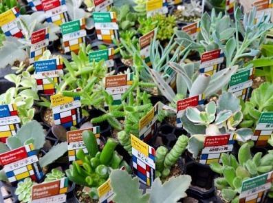 多肉植物ワークショップと9月の豆盆栽ワークショップ_d0263815_17043474.jpg