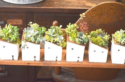 多肉植物ワークショップと9月の豆盆栽ワークショップ_d0263815_17052545.jpg