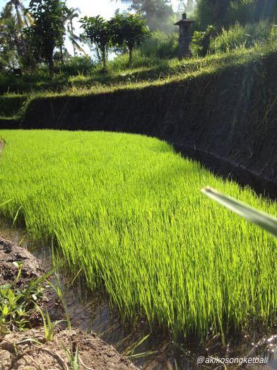 田んぼに水が引かれ始めております。_a0120328_20585468.jpg