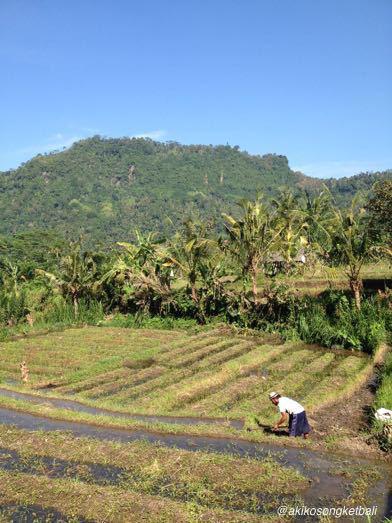 田んぼに水が引かれ始めております。_a0120328_20590942.jpg