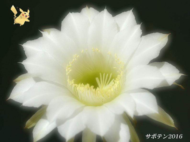 d0251161_10283012.jpg