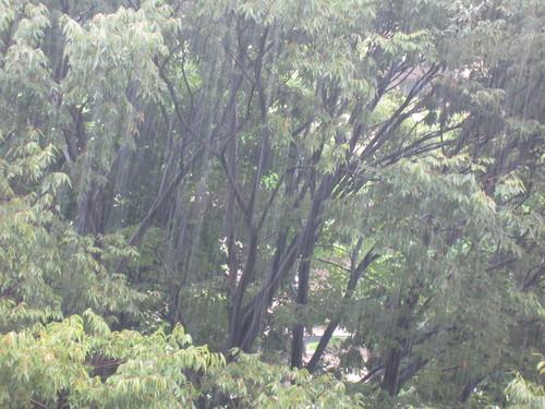 昨日の雨から一転_f0256164_10392265.jpg