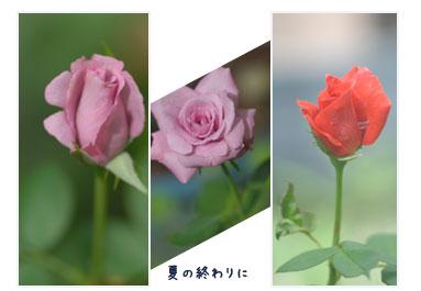 c0051105_275095.jpg