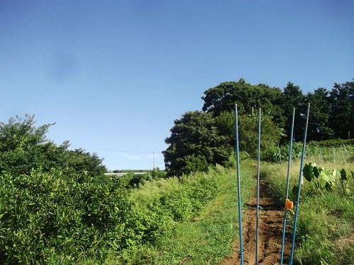 秋野菜の準備は停滞中です。_b0137932_1164534.jpg