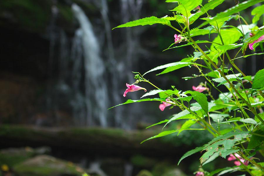 猿壺の滝\'16 2_c0067040_21462061.jpg
