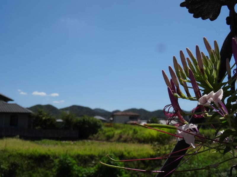 ぼちぼちと畑作業もしなければ・・・_c0108460_20122423.jpg