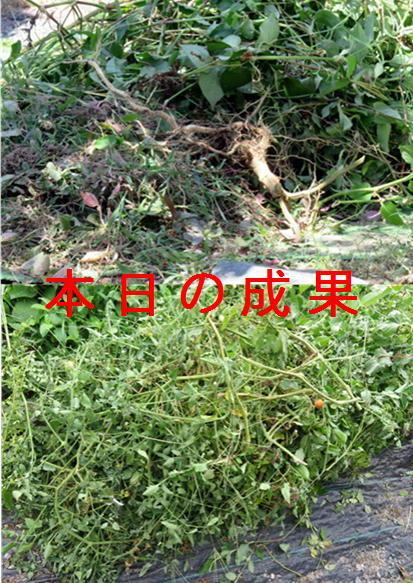 f0003174_14154857.jpg
