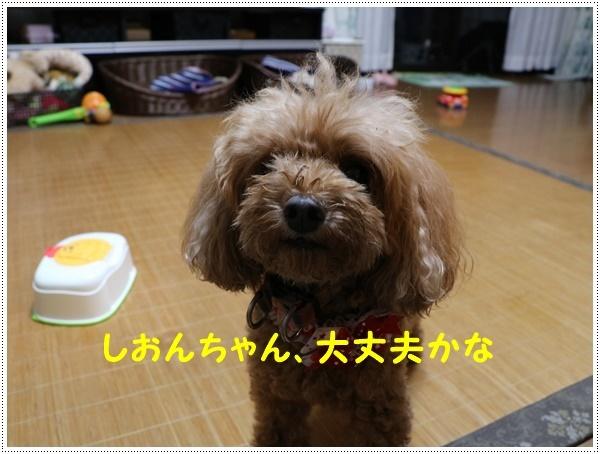 b0175688_20140102.jpg