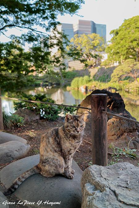 猫のいる風景 日比谷公園のムギワラちゃん_b0133053_00571947.jpg
