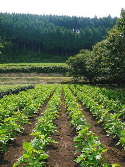 『えごま油』再入荷!本日より販売開始!熊本県菊池市産の無農薬栽培のエゴマです!!_a0254656_1994471.jpg