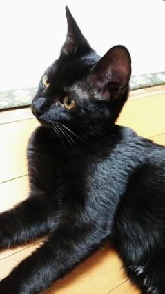 うちの猫、随分大きくなりました_f0168392_22064416.jpg