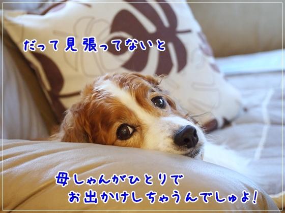 d0013149_00031590.jpg