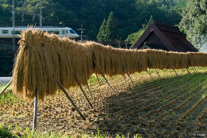 稲刈り_c0350572_21494406.jpg