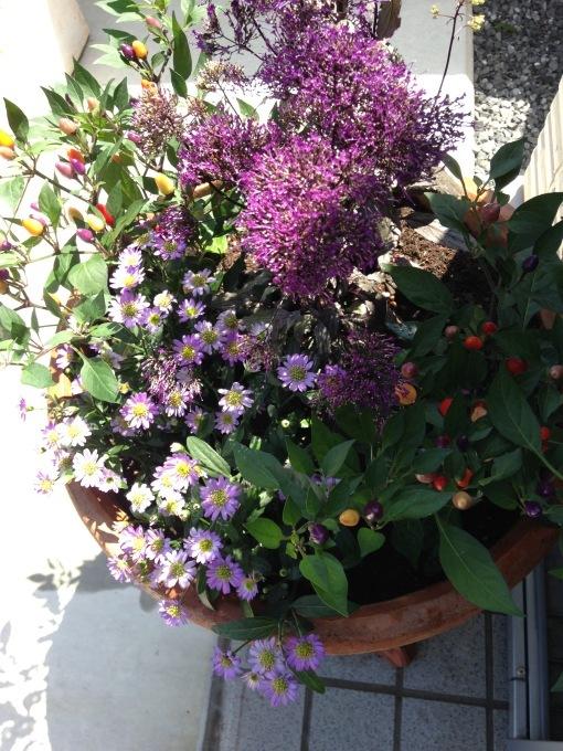 今月の花 ①_b0167282_01023032.jpg