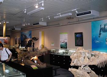 北大総合博物館リニューアル_f0078286_10241042.jpg
