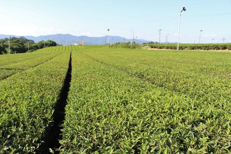 紅茶を追っかけて、豊橋_b0220318_08431960.jpg