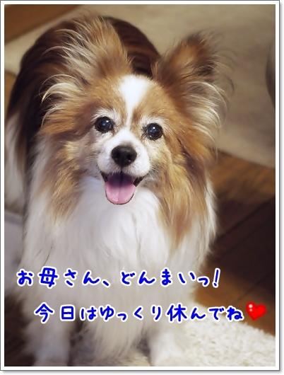d0013149_00133314.jpg