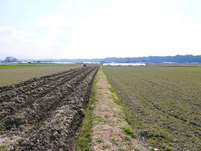 七城米 長尾農園 お米の花が咲きました 平成30年度の『七城米 長尾さんのこだわりのお米』残りわずか!_a0254656_1631461.jpg