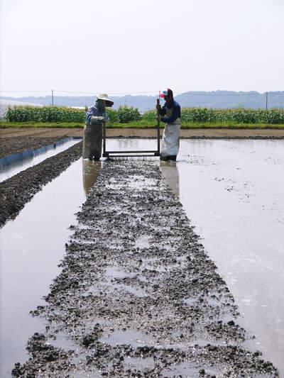 七城米 長尾農園 お米の花が咲きました 平成30年度の『七城米 長尾さんのこだわりのお米』残りわずか!_a0254656_16372818.jpg