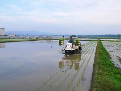 七城米 長尾農園 お米の花が咲きました 平成30年度の『七城米 長尾さんのこだわりのお米』残りわずか!_a0254656_1656150.jpg